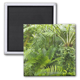 Amazon Rainforest, Amazonia, Brazil 2 Magnet