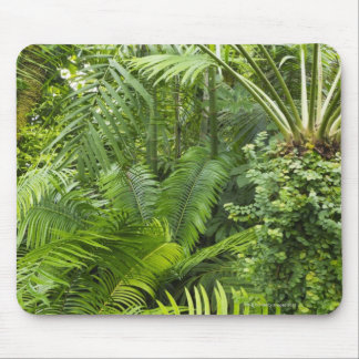 Amazon Rainforest, Amazonia, Brazil 2 Mouse Mat