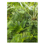 Amazon Rainforest, Amazonia, Brazil 2 Postcard