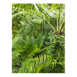 Amazon Rainforest, Amazonia, Brazil 2 Postcard