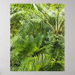 Amazon Rainforest, Amazonia, Brazil 2 Poster