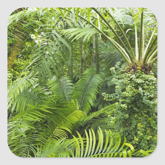 Amazon Rainforest, Amazonia, Brazil 2 Square Sticker