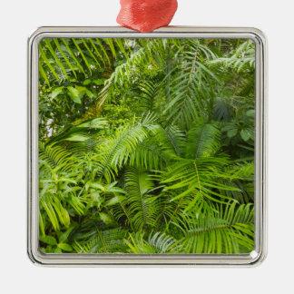 Amazon Rainforest, Amazonia, Brazil Christmas Ornament
