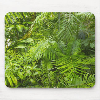 Amazon Rainforest, Amazonia, Brazil Mouse Mat