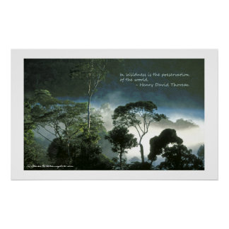 Amazon Rainforest at Dawn Poster
