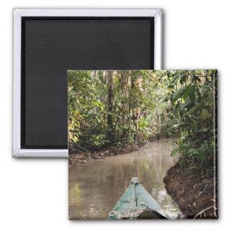 Amazon Rainforest, Puerto Maldanado, Peru. Magnet