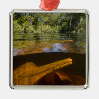 Amazon River Dolphins (Inia geoffrensis) Ariau Christmas Ornament