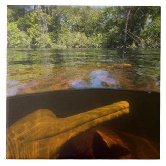 Amazon River Dolphins (Inia geoffrensis) Ariau Tile
