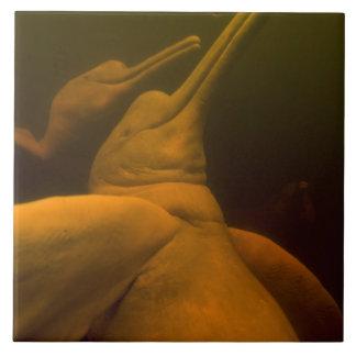 Amazon River Dolphins or Botos (Inia 2 Tile