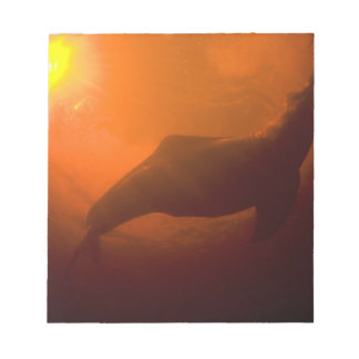 Amazon River Dolphins or Botos (Inia Notepad