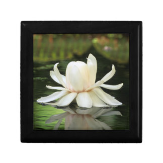 Amazon Water Lily (Victoria Amazonica) Flower Gift Box
