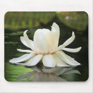 Amazon Water Lily (Victoria Amazonica) Flower Mouse Pad