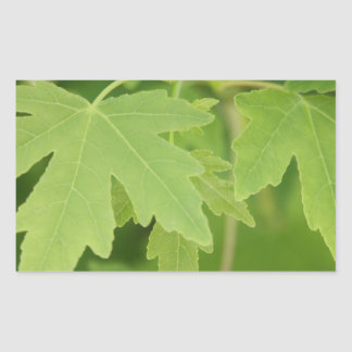 Amber Orientalis Leaves Rectangular Sticker