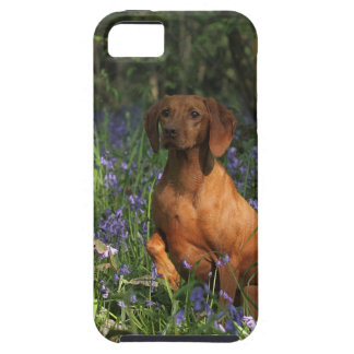 Amber Tough iPhone 5 Case