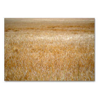 Amber Waves of Grain Card