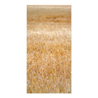 Amber Waves of Grain Photo Greeting Card