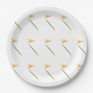 Amber-wings all around paper plate