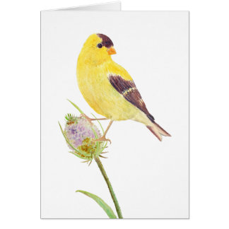America Goldfinch and Thistle Greeting Card