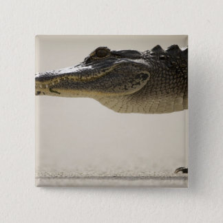 American Alligator, Alligator 15 Cm Square Badge