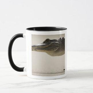American Alligator, Alligator Mug