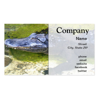 American Alligator Pack Of Standard Business Cards
