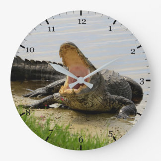 American alligator clock