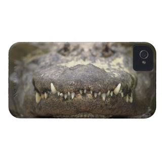 American alligator iPhone 4 cases