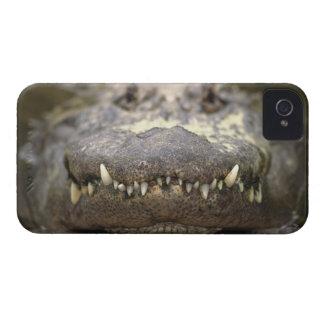 American alligator iPhone 4 cases