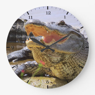 American Alligator Large Clock