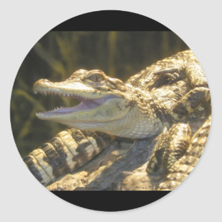 American Alligator Mouth Open Classic Round Sticker
