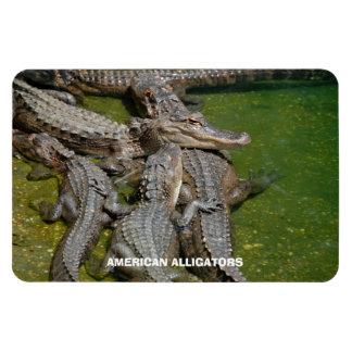 American Alligators Rectangular Photo Magnet