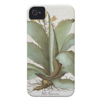 American Aloe: Aloe Americana, from the 'Hortus Ey iPhone 4 Cover