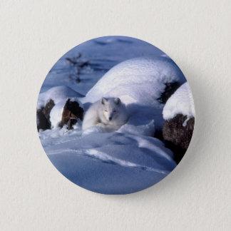 American Arctic Fox 6 Cm Round Badge