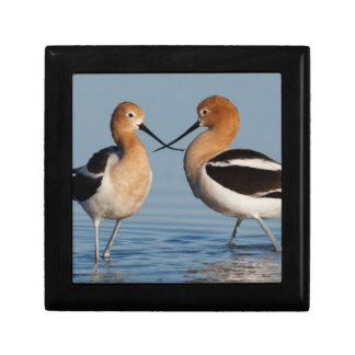 American Avocet Pair Gift Box