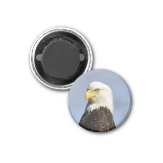 American Bald Eagle 3 Cm Round Magnet