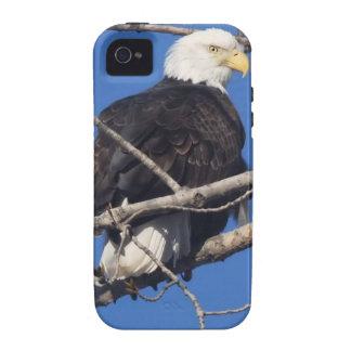 American Bald Eagle Vibe iPhone 4 Covers