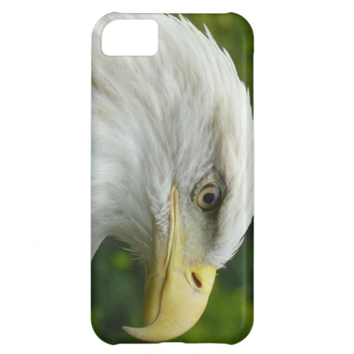 American Bald Eagle iPhone 5C Covers