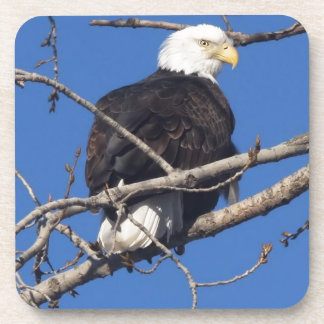 American Bald Eagle Drink Coasters