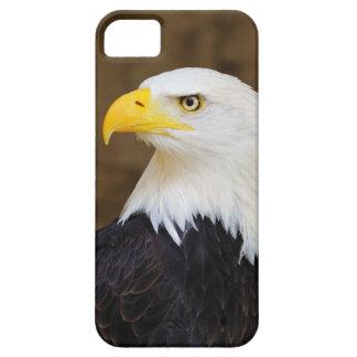 American Bald Eagle Haliaeetus Leucocephalus iPhone 5 Cases