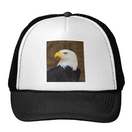 American Bald Eagle Haliaeetus Leucocephalus Trucker Hats