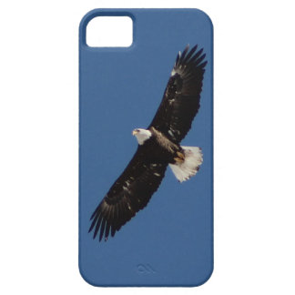 American Bald Eagle in Flight iPhone 5 Cover