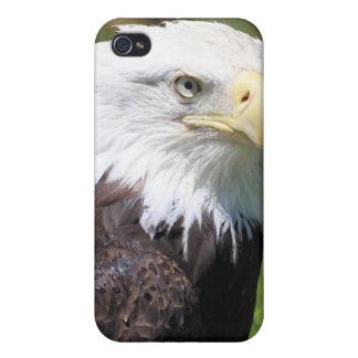 American Bald Eagle iPhone Case iPhone 4 Case