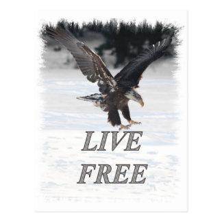 American Bald Eagle - Live Free Postcards
