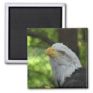 American Bald Eagle Magnet Refrigerator Magnet