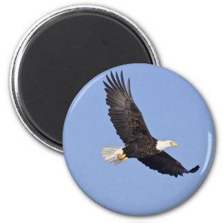 American Bald Eagle Fridge Magnets