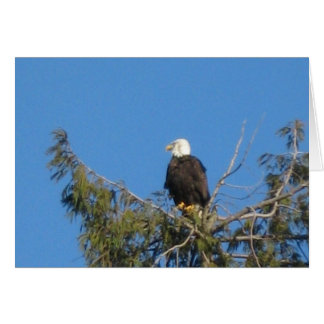 American Bald Eagle Note Card