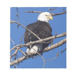 American Bald Eagle Scratch Pad