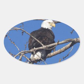 American Bald Eagle Oval Sticker