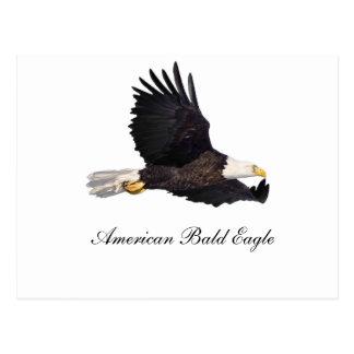 American Bald eagle Postcard