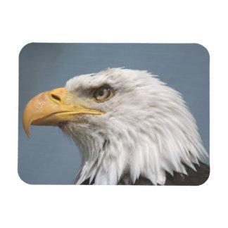 American Bald Eagle Rectangular Photo Magnet